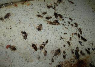 cockroach02